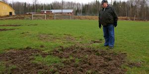 Stora delar av fotbollsplanen är förstörd efter vildsvinens bökande.