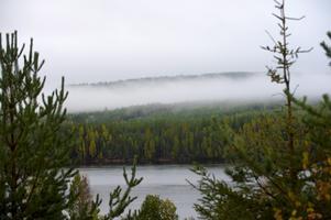 Här i Dalarna slutförs nu arbetet med regionalt skogsprogram. Foto: TT