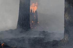 Markägarna vid Trängslet och Lima-Torgås kommer beröras av det stödpaket som regeringen kommer besluta om när det gäller brandskadade områden.