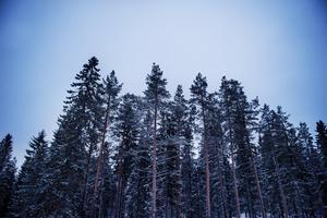 Johan Westman menar att det är en ära att få chansen att äga skog.