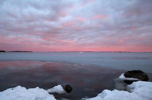 Så här skriver Nicolina om sin bild: Bifogar en bild från den kvällen i april då isen hade börjat lossa från land och i de öppna delarna av isen låg de första sjöfåglarna. Solen stod lågt på himlen, men bara känslan av att det fortfarande var ljust efter klockan sju var så härlig. Att få känna och höra våren i luften känns varje år som en seger över det mörka och kalla! I år kändes vårvittringen en fredagskväll vid Svartlögafjärden, Blidö.Foto: Nicolina Kulander