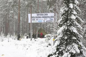 Greenpeace slog upp tält och banderoller vid Brännvinsberget strax före jul.
