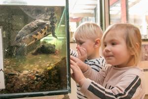 Sköldpaddan Stenis heter så för att barnen tyckte att han såg ut som en sten.