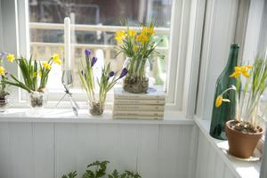 När man kommer hem till Ida blir man vårigt välkomnad av vårlökar i fönstren. De gula krokusarna är uppallade på en trave med Dan Andersson böcker.