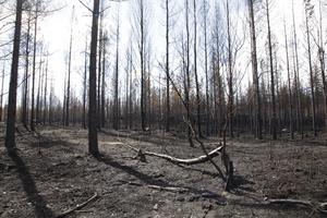 Så ser skogen ut efter branden i Fågelsjö söder om Sveg.