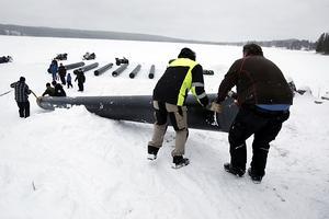 Den sista av åtta pontoner till flotten dras ner på isen. Nu börjar man ana storleken på flotten.