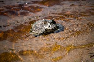 En sten som användes i attacken ligger kvar i strandbrynet. Den är tung och cirka 30 centimeter på bredden.