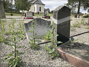 Många oskötta gravar har blivit ett problem i Kramfors pastorat