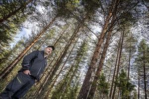 Östen Hansson har runt 130 hektar skog i Fillsta strax utanför Östersund och har drabbats av törskatesvamp på en del av beståndet
