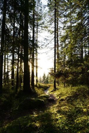 Om du åker till Ödarv kan du från fäboden gå upp genom bebyggelsen till stigen som leder till Ödarvsklitten. Här finner du en topp med milsvid utsikt.