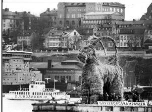 Bocken på en ponton i Stockholms ström. Det har faktiskt hänt. Bild: Arkiv