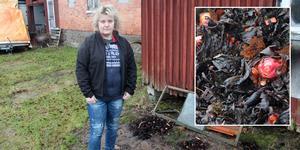 Ulrika Johansson brukar få mycket rabarber varje år. Håller mildvädret i sig får hon en rekordtidig skörd.