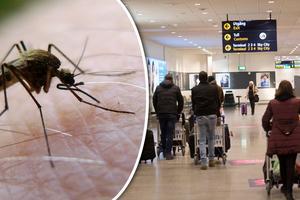 Även om risken är liten att få virussmittan japansk encefalit, som sprids via myggor, är den inte mindre än för andra sjukdomar vi vaccinerar oss mot inför Asienresan. Bild: Johan Nilsson/TT & Fredrik Sandberg/TT