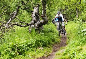 Enligt överklagan är det oklart om cykling sker på ett problematiskt vis i större utsträckning än när vandrare och löpare rör sig i fjällterrängen.