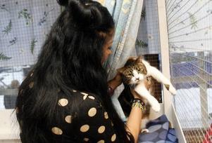 – Har du saknat mig?Zinat Pirzadeh gosar ömt med La Luna, en av två katter som hon lämnat till Gefle Katthem i hopp om att de ska hitta nya hem åt dem. Hennes hektiska turnerande som ståuppkomiker gör att hon inte längre hinner ta hand om sina husdjur.