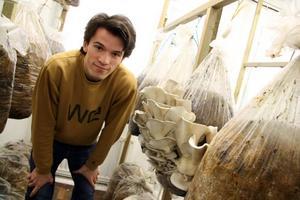 Skördetid. Aleksandar Muzdalo berättar att det är viktigt att ostronskivlingarna plockas vid exakt rätt tidpunkt.