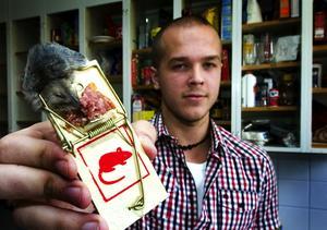 Råttfångare. Niklas Jonsson har tröttnat på snusket i gemensamma utrymmen på studenboendet. Han har själv satt ut råttfångare och lyckats få fast en av de två möss som bor i köket. Foto:Mikael Forslund
