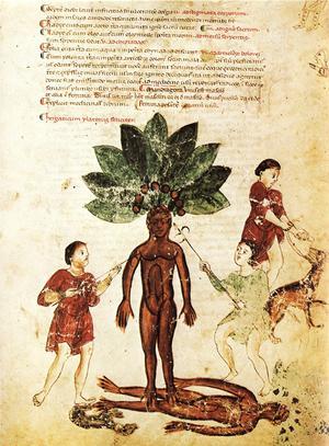 Beskrivning av den mänskliga alrunan från medicinsk skrift från 1250-talet.
