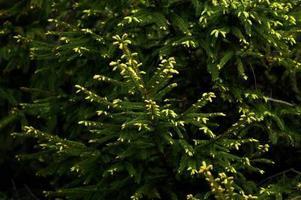 Barrväxter finns i mängder av storlekar och nyanser. Någonting borde kunna passa även den mest kräsna!