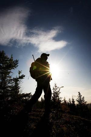 Jaktsäsongen för älg är snart här.  Foto: Scanpix