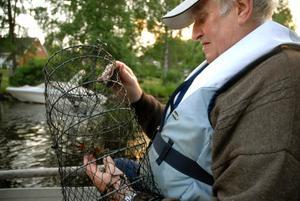 Ställer in. Roland Carlsson och de andra i fiskevårdsområdesföreningen kunde konstatera att det fanns så lite kräftor att årets kräftfiske för allmänheten ställs in.