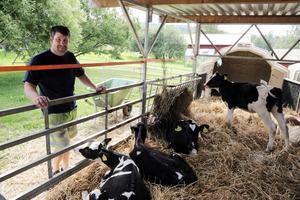 Örjqan Henriksson föder upp både slaktdjur och kvigor som ska bli mjölkor.