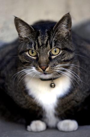 Katten på bilden är inte den som sköts.