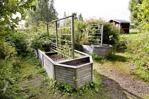 I drivlådorna växer mer ogräs än trädgårdsväxter. Efter sju års igenväxning återstår inte mycket av makarna Irja och Håge Perssons vackra park.