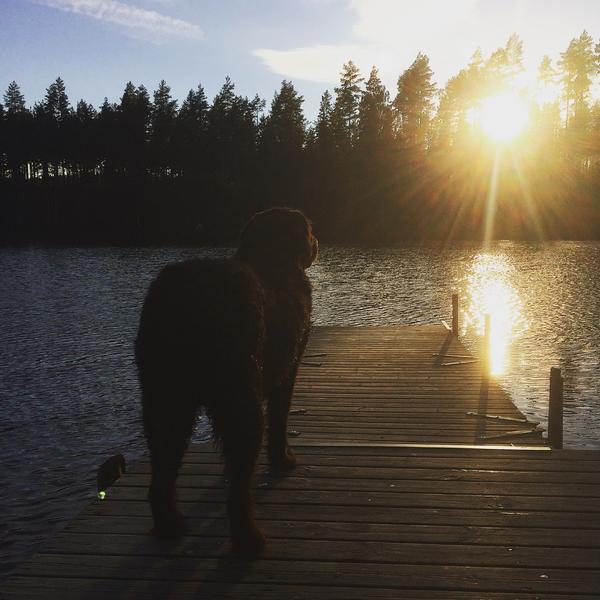 Nellie njuter av lugnet vid Hornfisksjön.