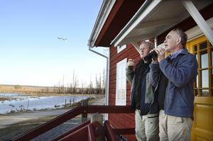 Rikt fågelliv. Torbjörn Arvidson och Clas Thor siktar havsörn. De båda ligger bakom en ny guide till Oset och Rynningeviken.BILD: ANDERS ERKMAN