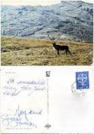 ÖP:s artikel 2007, om att George Harrison besökt Jämtland, väckte en del uppmärksamhet på olika Beatles-forum. Dessutom dök några vykort upp på E-bay.Renen på fjällsluttningen är motivet på ett av de vykort som i augusti 1976 skickades från Jämtland och som skrivits under av bland annat George.Ett annat av de Jämtlandskort som funnits ute på auktionssajter var postat till Georges pappa i England.Det vykort som syns här intill skickades egentligen av Tina Wright.– Kortet är adresserat till en av mina kusiner i Mellansverige, berättar hon.Naturligtvis är det Georges autograf som gjort att ägaren försökt omsätta kortet i pengar.I och med att den nya gästboken dykt upp kan vi korrigera det datum när Beatlesmedlemmen var på oväntat Jämtlandsbesök. Sällskapet lämnade Optand 6 augusti 1976.2007 skrev vi att besöket var i juni 1976. Misstaget berodde på att man i den första dagboken skrivit datumet på amerikanskt vis, alltså med dagen före månaden.