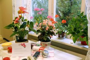 Blommor har alltid varit ett stort intresse för Stina Fröjd. Trots att hon inte ser dem lika bra längre vill hon fortfarande ha blomsterfägring omkring sig.