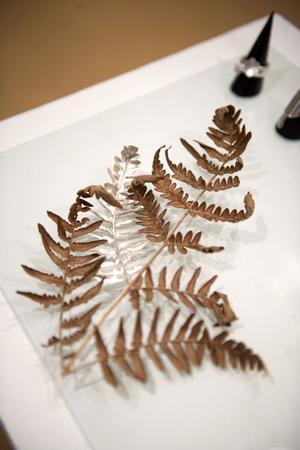En av Emma Billbäcks arbeten i serien Naturproteser, där hon kompletterar naturen med tillägg i silver.