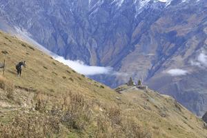 Vandring i norra Georgien, på väg upp mot toppen av Kazbegi. En häst riktar blicken mot Gergeti Trinity Church, byggd på 1300-talet, på över 2000 meters höjd.   Foto: Mimmi Granat