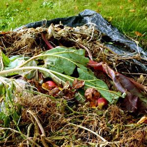 En kickstart. Lite färdig kompost med miljoner aktiva organismer göra att nedbrytningen av de färskare växtdelarna kan komma i gång snabbare.