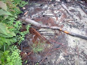 Tydliga rester av stålcord finns på så gott som samtliga platser där kommunen bränt ris efter den senaste röjningen i Fagervik.