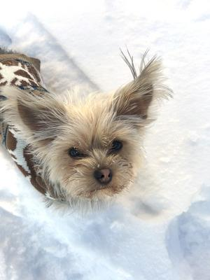 Om bilden: Vår familjs hund Bonnie en vinterdag i november 2019. Foto: John Davidsen
