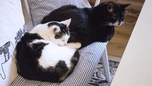 Kattduon som genom varandras sällskap återigen hittat glädjen med att leva.