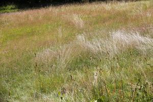 Ängsmark blir alltmer sällsynt i Sverige. Foto: Lise Åserud / NTB scanpix / TT