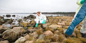 Jonna Eriksson ingår i det saneringsteam som i flera dagar arbetat med att ta rätt på oljan.
