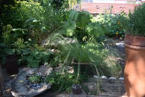 I örtagården.
