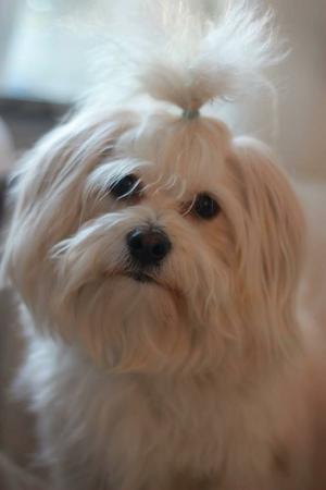 Hunden Östen är tillbaka hos sin familj igen, efter en turbulent natt.