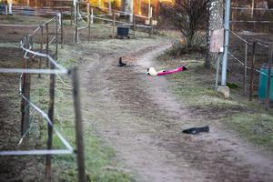 Tjuvarna hade tappat sadlar längs vägen vid ridklubben.