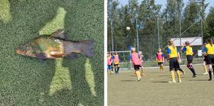 Fisken föll ner på fotbollsplanen mitt under en pågående match.