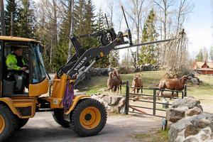 Mycket skulle behöva göras på djursidan, enligt personer med insyn i Furuviksparken.