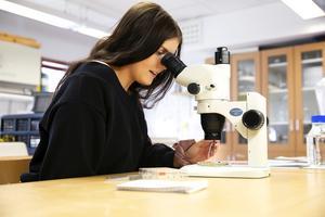 Nathalie Winther har räknat bönor ägg och larver med mikroskop och lupp under det senaste halvåret.