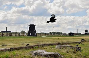 Majdanek var ett av Nazitysklands förintelseläger, beläget 4 kilometer från staden Lublin i sydöstra Polen.Foto: Jonas Ekströmer/TT