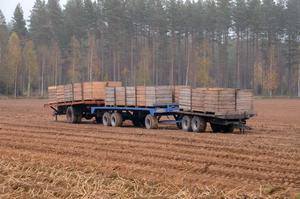 Vagnar som väntar på att bli fyllda med nyskördad potatis.