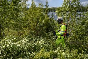 Mikael Broman anlitades av Vattenfall för att röja upp i området i Södra Lundevallen.