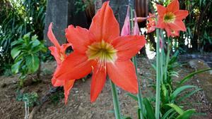 Exotiska blommor växer runt huset.